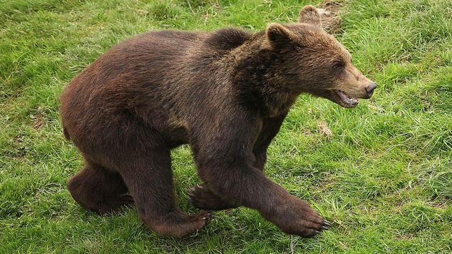 Bear hero img