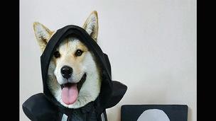 Owreaperdoge