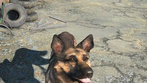 Dogmeat hero