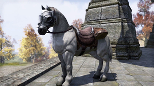 Teso imperial white horse