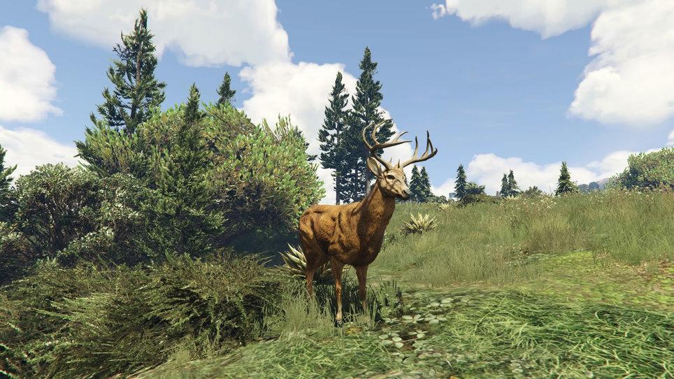 Deer gta